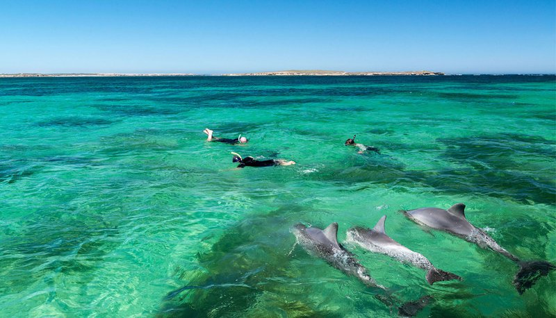 snorkelling with dolphins in South Australia.jpg