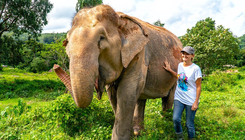 South East Asia Experience Phuket Elephants Day 12
