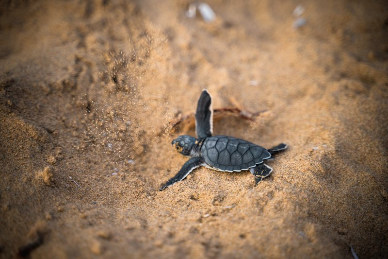 Turtle_Mexico_Blog